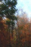 David Lane - Autumn Scene 10-23-09
